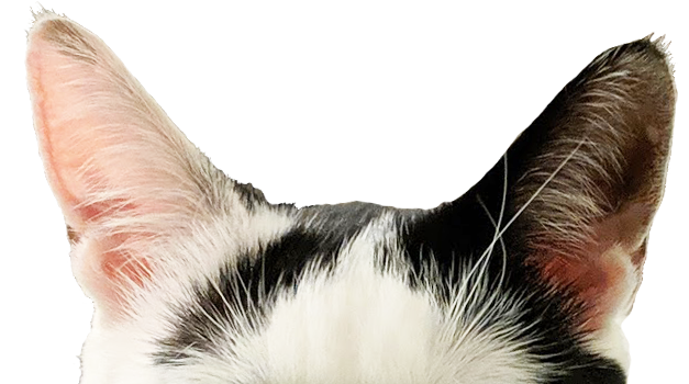 Lovely Yuan Ears