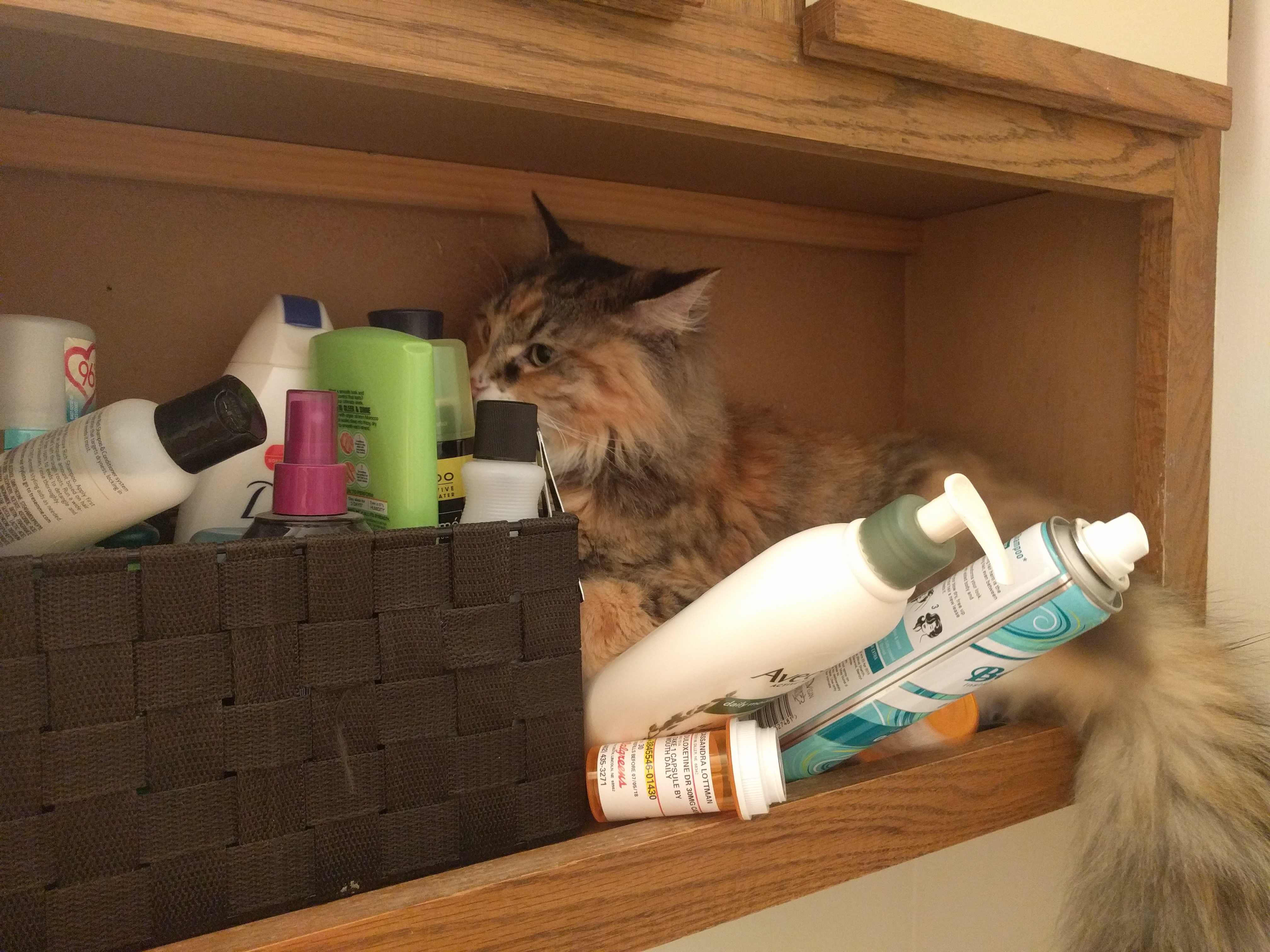 Tally sitting on a narrow shelf surrounded by beauty products that are about to fall off the shelf