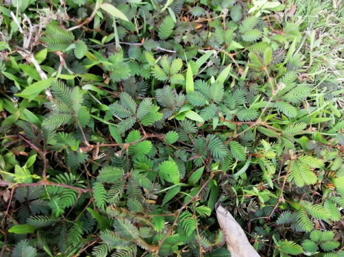 Prickly-Weeds