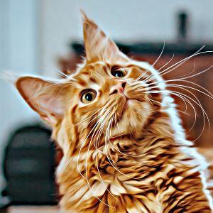 Thumbnail for Cat Name Generator