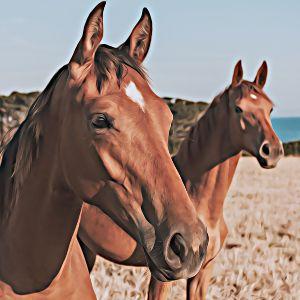 Thumbnail for Horse Name Generator