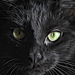 Thumbnail for Warrior Cat Name Generator