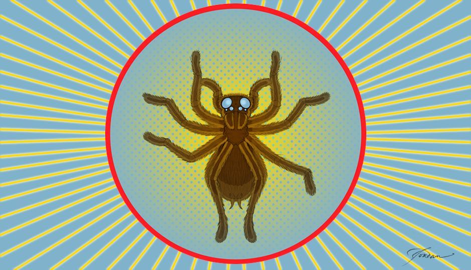 Image for Tarantulas in Flagstaff