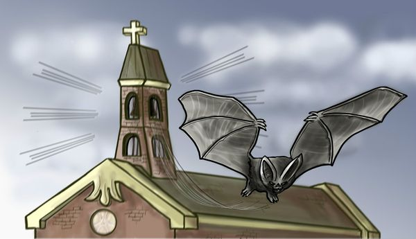 Image for Bat in the Belfry