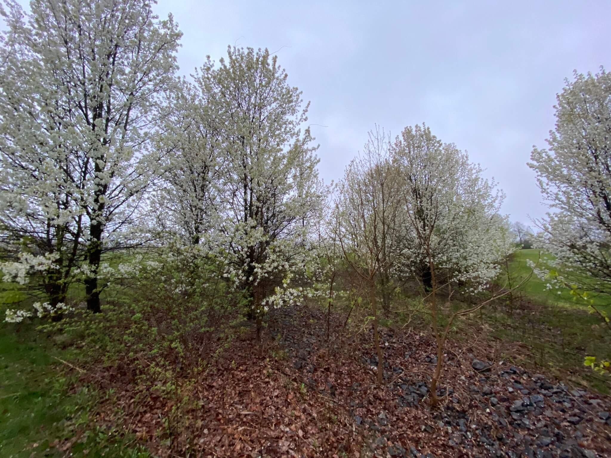 Trees at Circleville Park